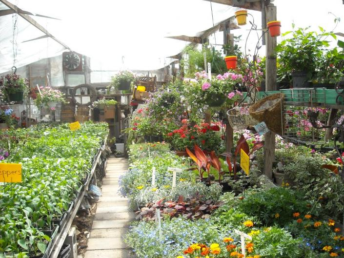 Looking for quality plants at competitive prices? Our greenhouses house the best plants, succulents and other exotic flowers in Ames, IA!