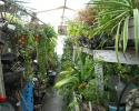 Enjoy a slice of the tropics in your home or office with our selection of tropical plants in our greenhouses!