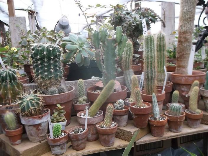 Need a unique gift idea? Get a cactus! With a variety of sizes available, you can find a gift idea in your price range.