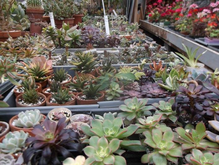 Shop our selection of beautiful and exotic succulents in our greenhouses. They make great gifts or add that nice touch of color to your home or office!