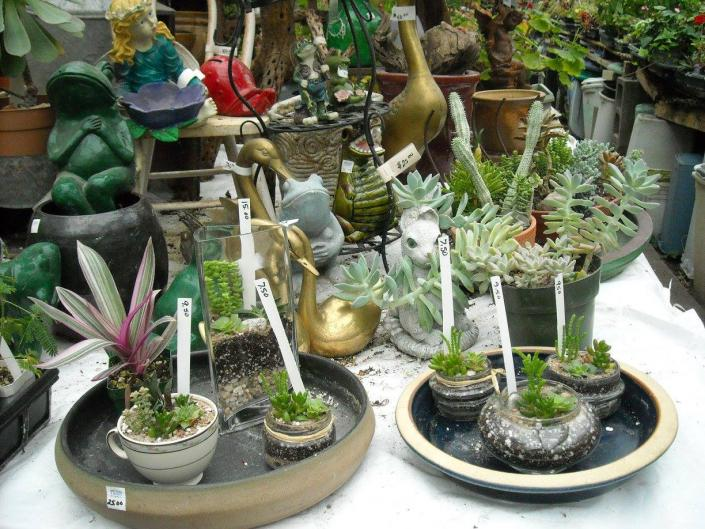 Want to add a special touch to your office desk or home garden? We can help you find that perfect piece or plant!